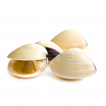 Cooked Clams 1kg